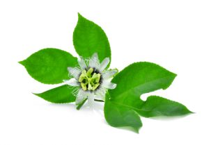 how passion flower can help with fluid iq
